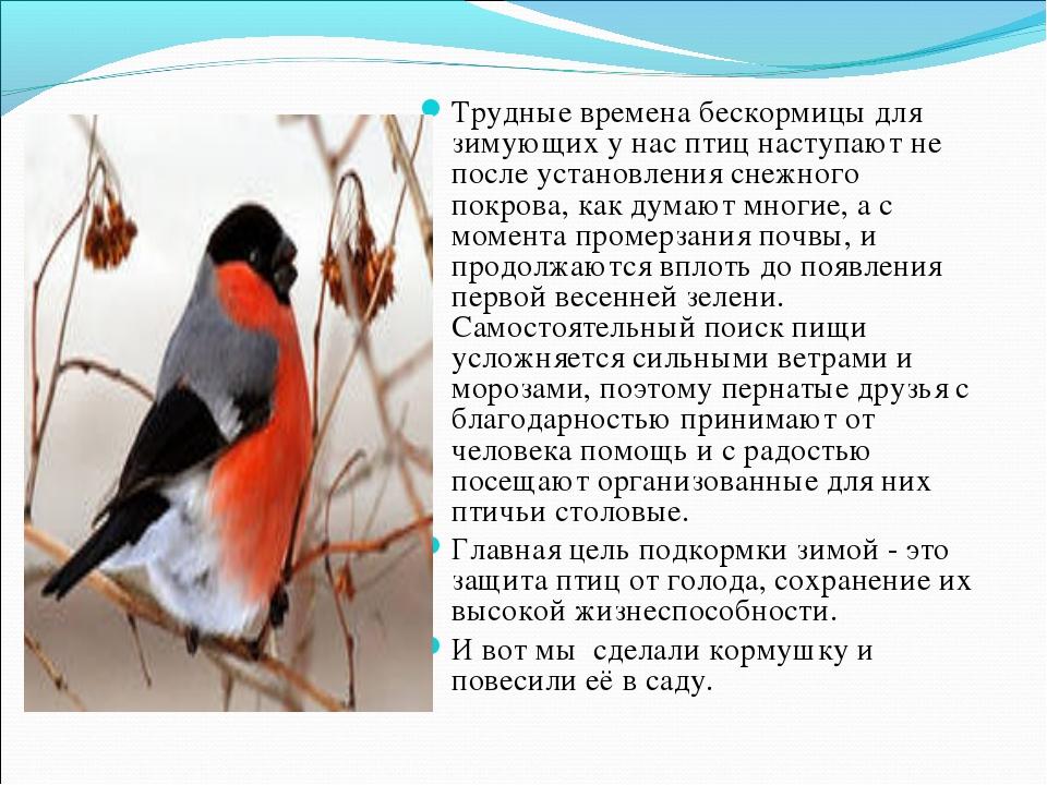 Трудные времена бескормицы для зимующих у нас птиц наступают не после установ...