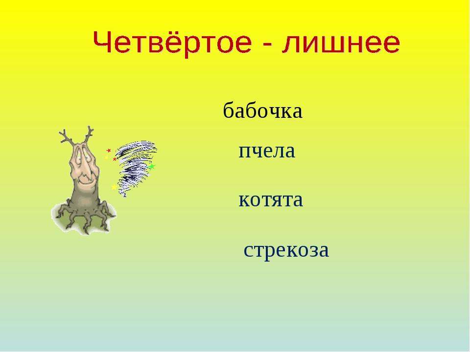 бабочка пчела котята стрекоза