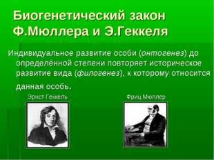 Биогенетический закон Ф.Мюллера и Э.Геккеля Индивидуальное развитие особи (он
