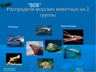 """Распредели морских животных на 2 группы """"SOS"""" Возврат к оглавлению Млекопита"""