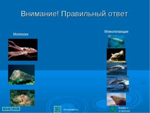 Внимание! Правильный ответ Возврат к оглавлению Млекопитающие Моллюски Аплоди