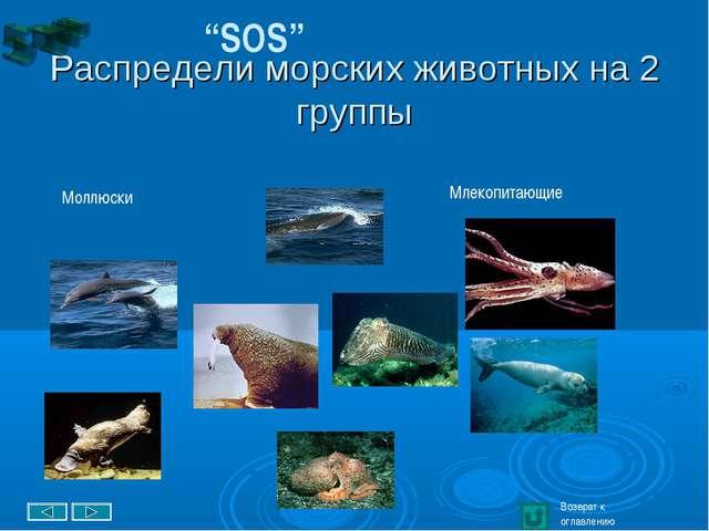 """Распредели морских животных на 2 группы """"SOS"""" Возврат к оглавлению Млекопита..."""