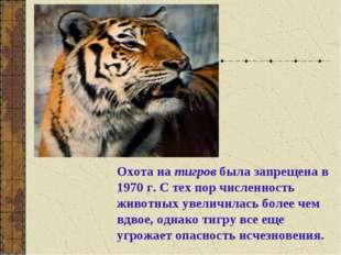 Охота на тигров была запрещена в 1970 г. С тех пор численность животных увели