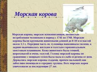 Морская корова Морская корова, морское млекопитающее, полностью истребленное