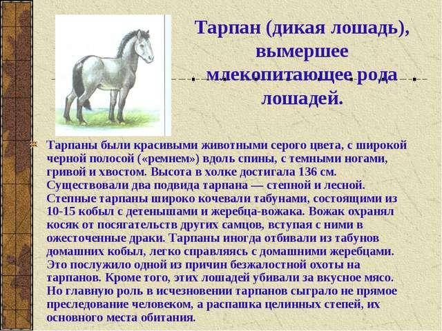Тарпан (дикая лошадь), вымершее млекопитающее рода лошадей. Тарпаны были крас...