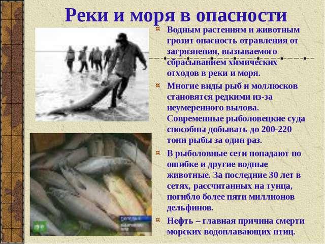 Реки и моря в опасности Водным растениям и животным грозит опасность отравлен...