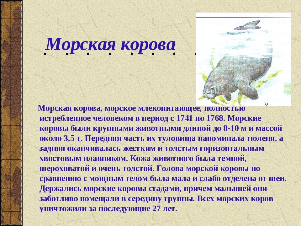 Морская корова Морская корова, морское млекопитающее, полностью истребленное...