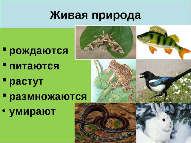 Живая природа рождаются питаются растут размножаются умирают