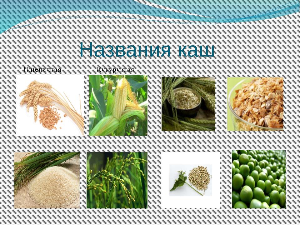 Названия каш Пшеничная Кукурузная Рисовая Пшенная Ячневая Овсяная Гречневая Г...