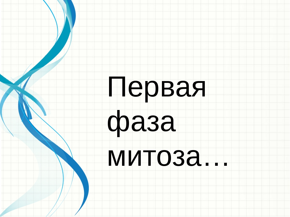 Первая фаза митоза…