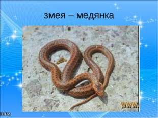 змея – медянка