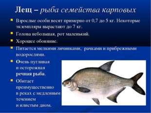 Лещ– рыба семейства карповых Взрослые особи весят примерно от 0,7 до 5 кг. Н