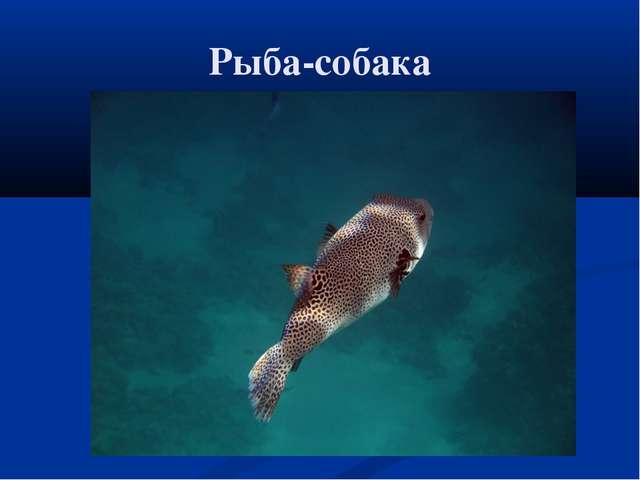 Рыба-собака