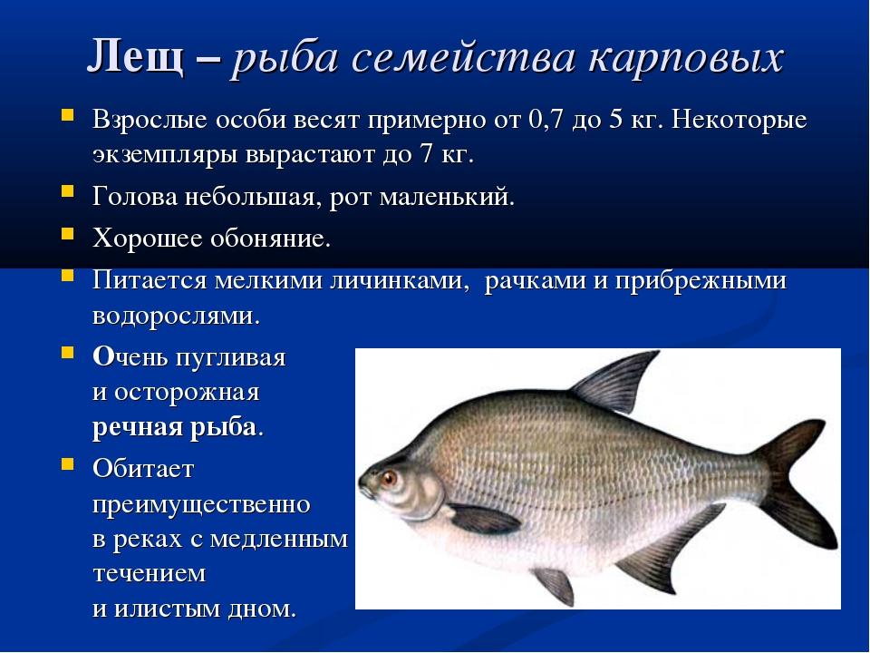 Лещ– рыба семейства карповых Взрослые особи весят примерно от 0,7 до 5 кг. Н...