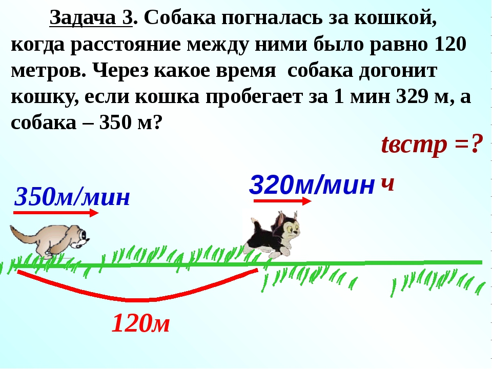 Решение: 350 - 320 = 30 (км/ч) - равна скорость сближения собаки и кошки; 12...