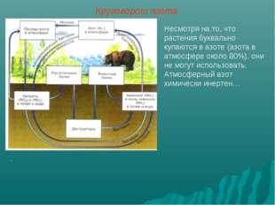 Несмотря на то, что растения буквально купаются в азоте (азота в атмосфере ок