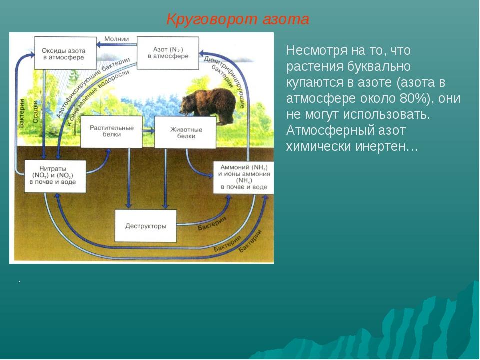 Несмотря на то, что растения буквально купаются в азоте (азота в атмосфере ок...