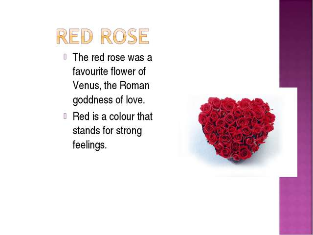 The red rose was a favourite flower of Venus, the Roman goddness of love. Red...