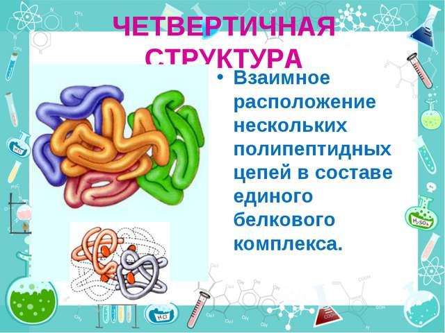 ЧЕТВЕРТИЧНАЯ СТРУКТУРА Взаимное расположение нескольких полипептидных цепей в...