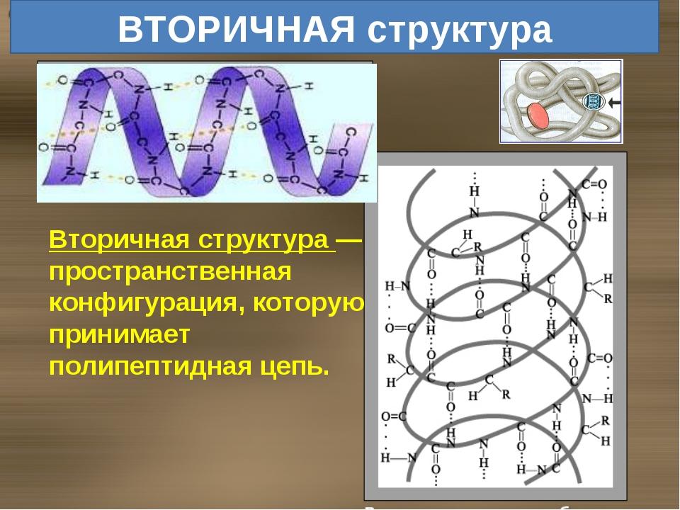 ВТОРИЧНАЯ структура Вторичная структура — пространственная конфигурация, кото...