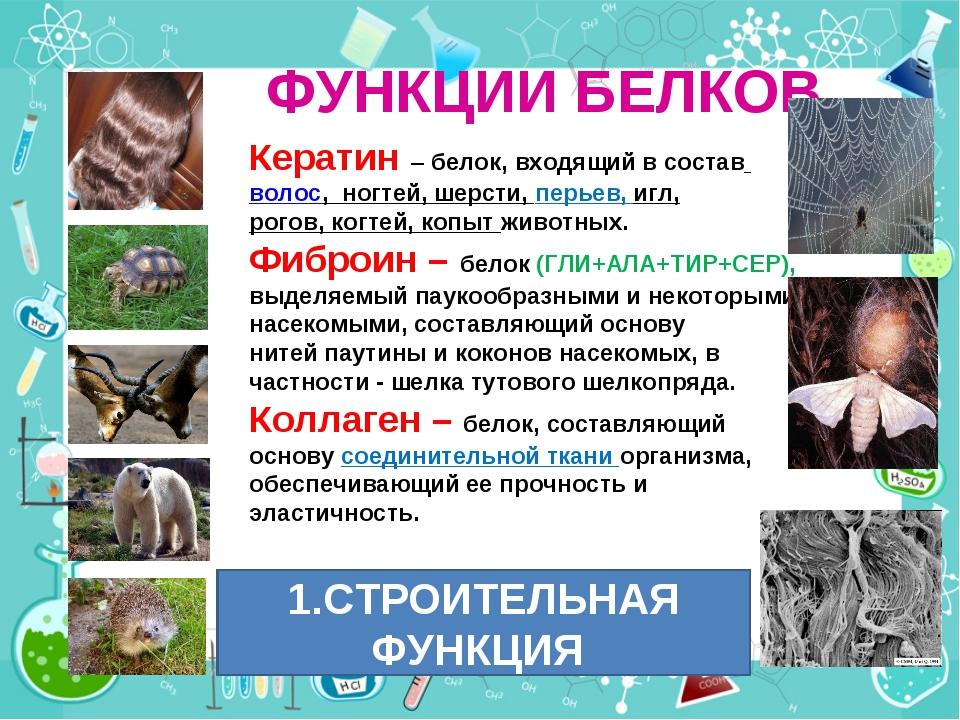 ФУНКЦИИ БЕЛКОВ Кератин – белок, входящий в составволос, ногтей, шерсти, пер...