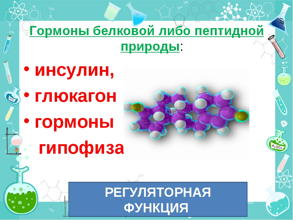 Гормоны белковой либо пептидной природы: инсулин, глюкагон гормоны гипофиза....