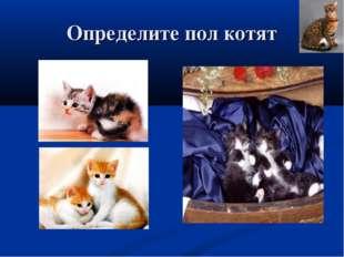 Определите пол котят