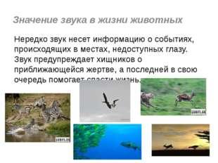 Значение звука в жизни животных Нередко звук несет информацию о событиях, пр