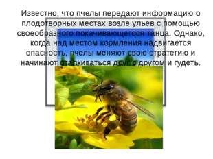 Известно, что пчелы передают информацию о плодотворных местах возле ульев с
