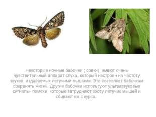 Некоторые ночные бабочки ( совки) имеют очень чувствительный аппарат слуха,