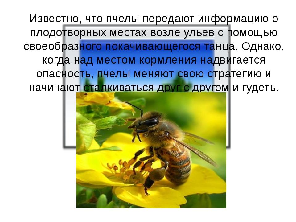 Известно, что пчелы передают информацию о плодотворных местах возле ульев с...