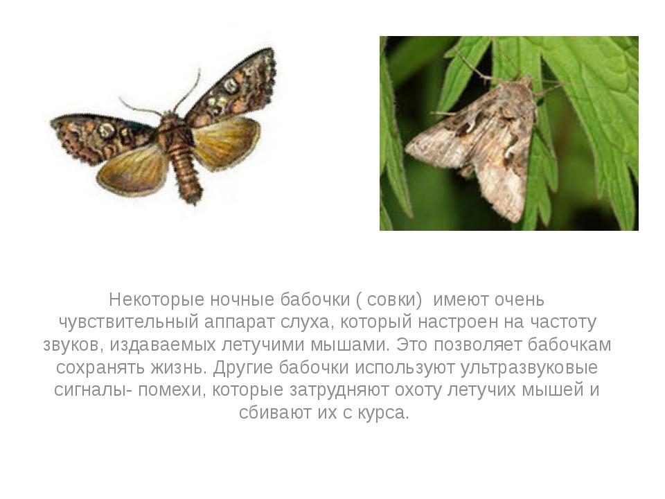 Некоторые ночные бабочки ( совки) имеют очень чувствительный аппарат слуха,...