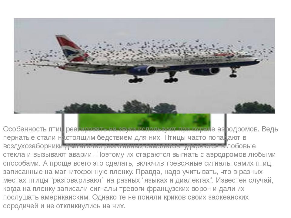 Особенность птиц реагировать на звуки используют при охране аэродромов. Ведь...