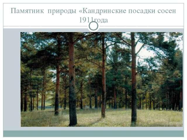 Памятник природы «Кандринские посадки сосен 1911года