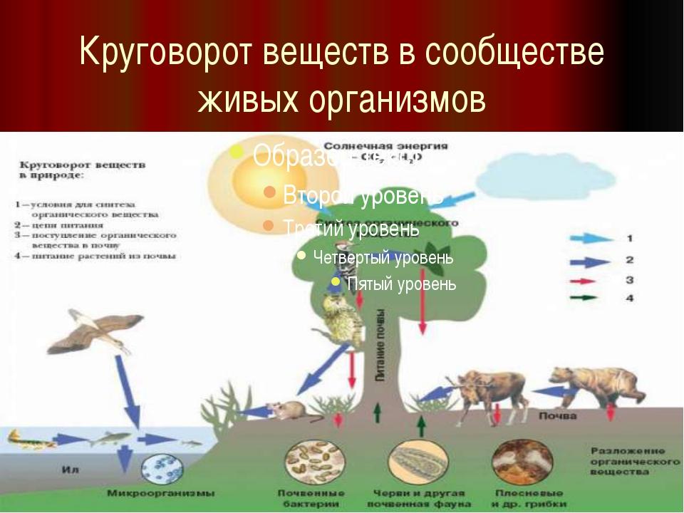 Круговорот веществ в сообществе живых организмов