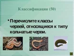 Перечислите классы червей, относящиеся к типу кольчатые черви. Классификация