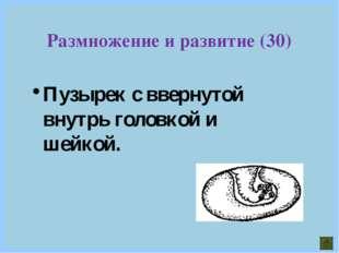 Пузырек с ввернутой внутрь головкой и шейкой. Размножение и развитие (30)