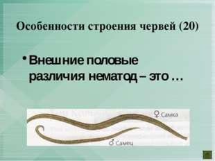 Внешние половые различия нематод – это … Особенности строения червей (20)