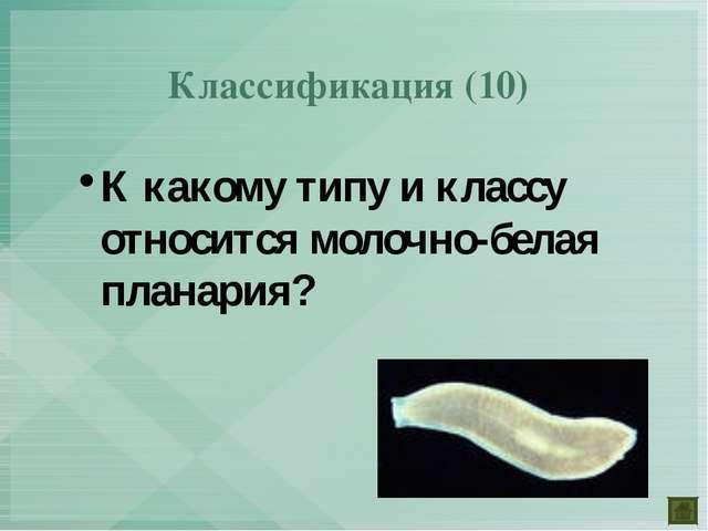 Классификация (10) К какому типу и классу относится молочно-белая планария?