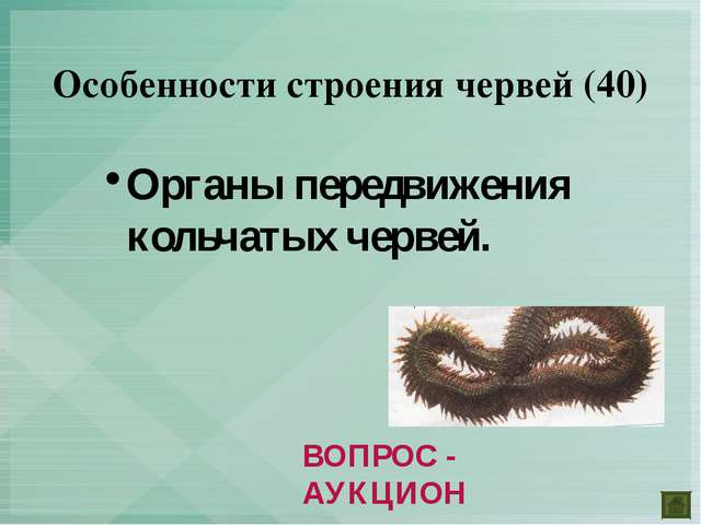Органы передвижения кольчатых червей. Особенности строения червей (40) ВОПРОС...