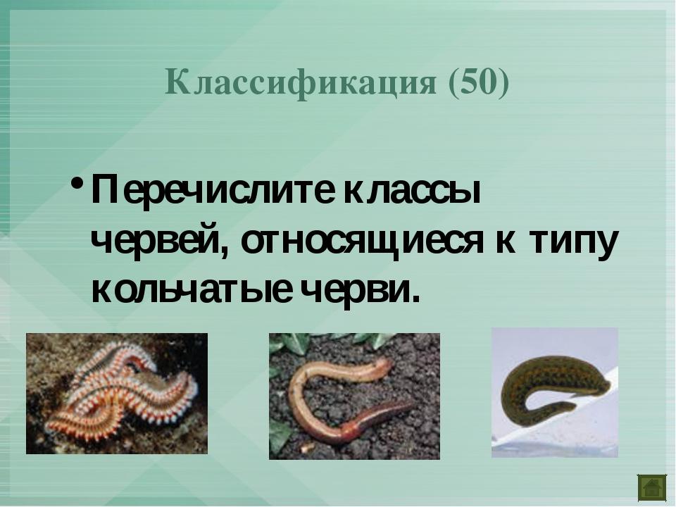 Перечислите классы червей, относящиеся к типу кольчатые черви. Классификация...