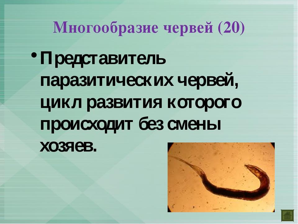 Представитель паразитических червей, цикл развития которого происходит без см...