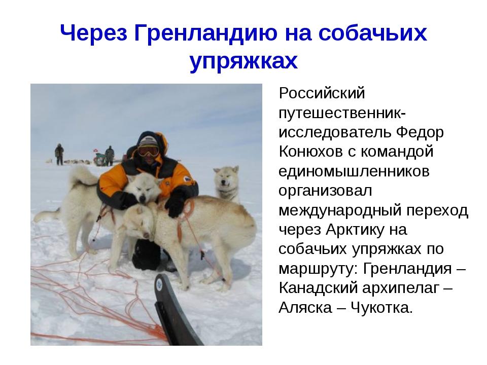 Через Гренландию на собачьих упряжках Хапилина Е.Л. МОУ СОШ № 24 Кострома Рос...