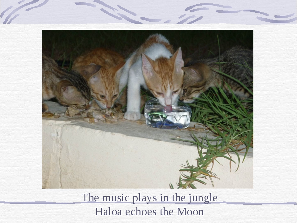 The music plays in the jungle Haloa echoes the Moon