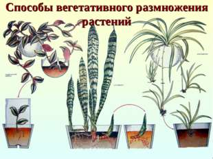 Способы вегетативного размножения растений