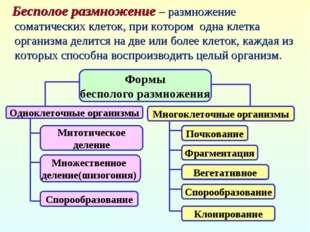 Формы бесполого размножения Одноклеточные организмы Многоклеточные организмы