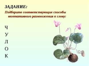 ЗАДАНИЕ: Подберите соответствующие способы вегетативного размножения к слову:
