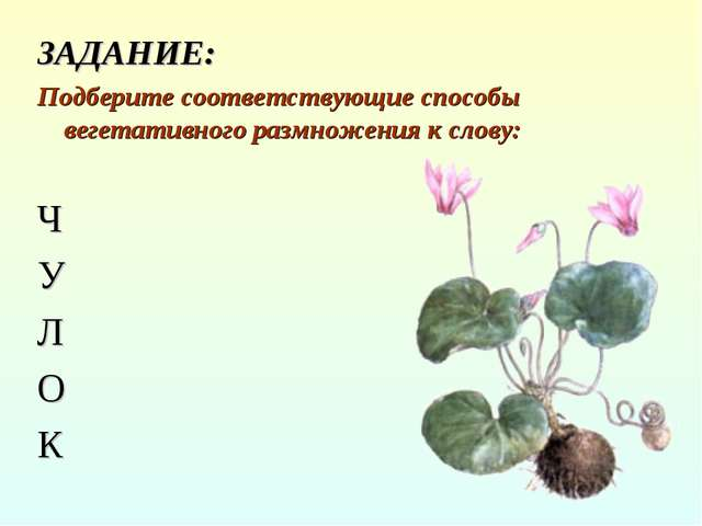 ЗАДАНИЕ: Подберите соответствующие способы вегетативного размножения к слову:...