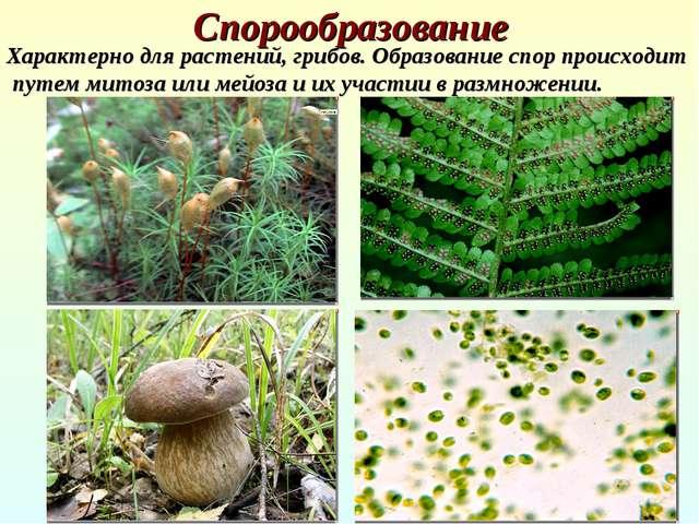 Спорообразование Характерно для растений, грибов. Образование спор происходит...