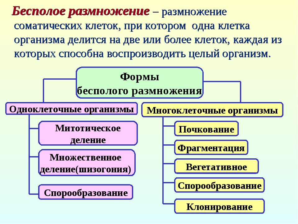 Формы бесполого размножения Одноклеточные организмы Многоклеточные организмы...